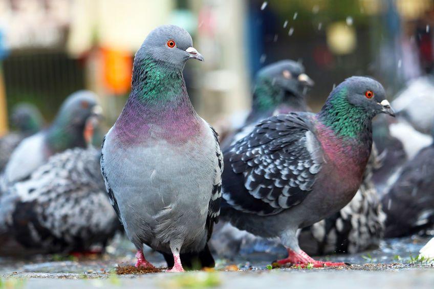 palomas excrementos toldos casa